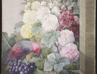 10. Pierre-Joseph RedoutÇ (1759-1840), Fleurs - roses trÇmiäres, raisins et le lori cramoisi