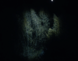 "ZEBRA KATZ ""BLK & WHT"" by Ada Bligaard Soby"
